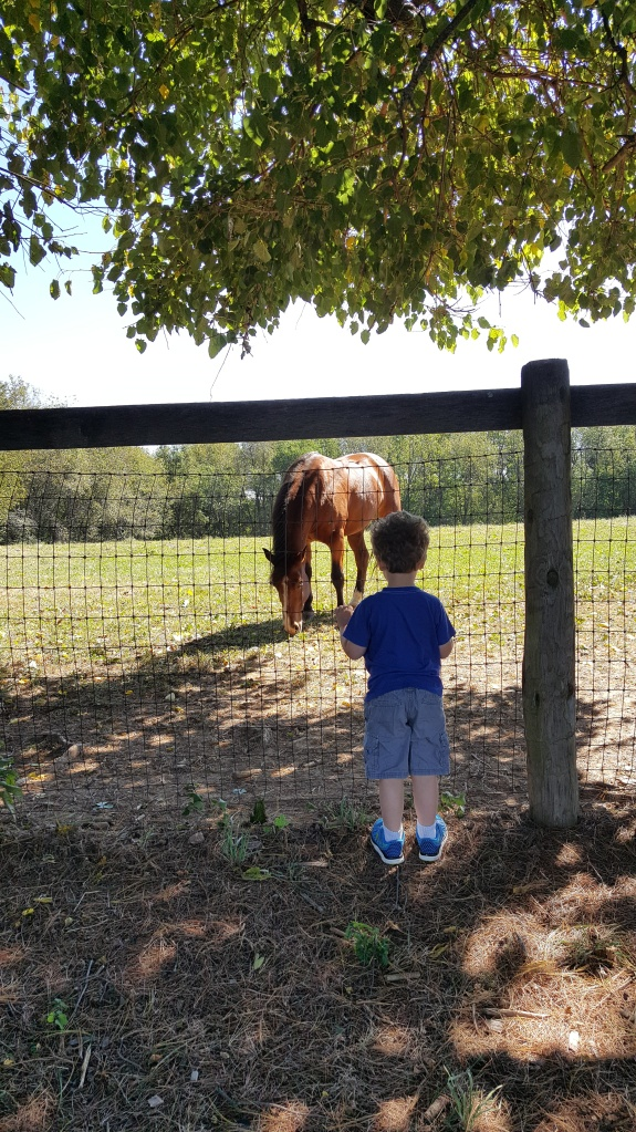 Watching a horse by the playground